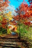 Het gebladerte van de herfst langs een grondweg. Stock Fotografie