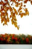 Het gebladerte van de herfst langs een rivier. Stock Foto