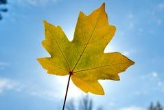 Het gebladerte van de herfst tegen de zon Royalty-vrije Stock Foto's