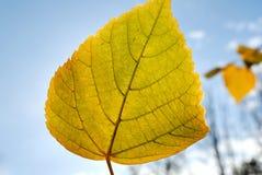 Het gebladerte van de herfst tegen de zon Stock Afbeelding