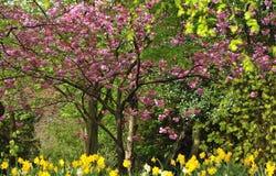 Het gebladerte van de lente Royalty-vrije Stock Fotografie