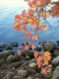 Het gebladerte van de oever van het meer Royalty-vrije Stock Fotografie