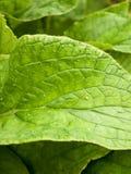 Het gebladertedetail blad van het achtergrond groen textuurpatroon Stock Afbeeldingen