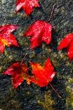 Het gebladertekleuren van de daling stock foto