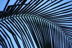 Het gebogen palmvarenblad leidt tot abstract patroon tegen een blauwe hemel Royalty-vrije Stock Afbeeldingen