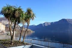 Het Gebrek Lugano1 van palmen Royalty-vrije Stock Fotografie