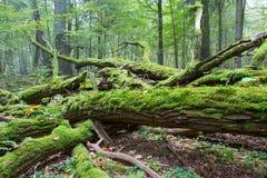 Het gebroken eiken verpakte mos van de boomtak Stock Fotografie