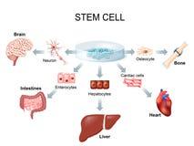 Het gebruiken van stamcellen om ziekte te behandelen royalty-vrije illustratie