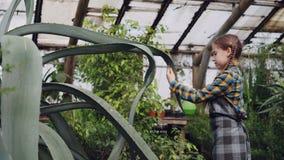 Het geconcentreerde kind bestrooit water op bladeren van altijdgroene installatie met spuitbus binnen serre Familiebedrijf stock videobeelden