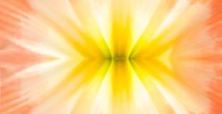 Het gedetailleerde bloemblaadje is symmetrie Stock Afbeeldingen