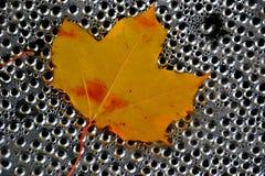 Het geel-rode blad van de de herfstesdoorn Stock Fotografie