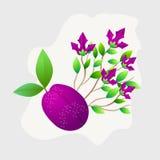 Het geheel van het pruimfruit met groene bladeren dat op witte achtergrond wordt geïsoleerd Vector illustratie royalty-vrije illustratie