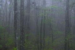 Het geheime bos stock foto's