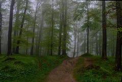 Het geheimzinnige bos Royalty-vrije Stock Fotografie