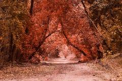 Het geheimzinnige de herfstbos is zeer mooi Stock Fotografie