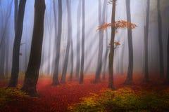 Het geheimzinnige mistige bos met een fairytale ziet eruit Stock Afbeelding