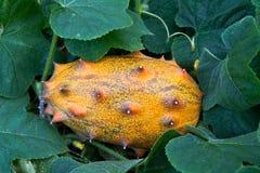 Het gehoornde Fruit van de Meloen Stock Foto's