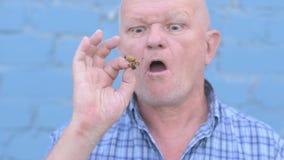 Het gekke Russische bejaarde met een geschoren hoofd houdt een insect Gryllotalpidae en eet ongedierteinsect stock footage