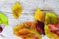 Het gekleurde close-up van de herfstbladeren op een witte houten achtergrond Stock Fotografie