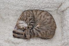 Het geknuffel van de gestreepte kat Stock Foto's