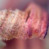 Het gekrulde pruim houten scheren Stock Fotografie