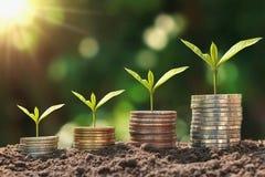 Het geld van de conceptenbesparing installatie groeiende stap met muntstukkenstapel op vuil en zonneschijn royalty-vrije stock afbeeldingen