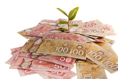 Het Geldboom van Canada Stock Foto's