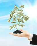 Het geldboom van de mensenholding op zijn palm Stock Fotografie