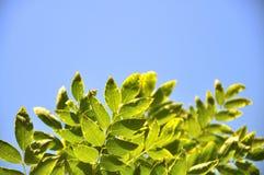 Het gele blad in de hemel in de herfst Stock Afbeelding