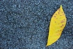 De textuur van het asfalt met geel blad Stock Afbeelding