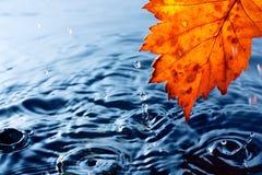 Het gele blad van de herfst met dalingen Royalty-vrije Stock Afbeelding
