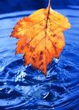 Het gele blad van de herfst met dalingen Royalty-vrije Stock Afbeeldingen