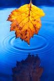Het gele blad van de herfst met dalingen Stock Foto's