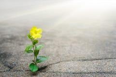 Het gele bloem groeien op barststraat, hoopconcept stock foto's