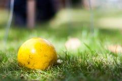 Het gele Close-up van de Croquetbal royalty-vrije stock foto