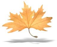Het gele geïsoleerder verlof van de de herfstboom met schaduw stock foto