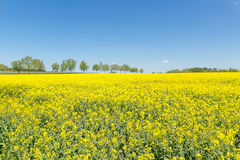 Het gele gebied Royalty-vrije Stock Afbeeldingen