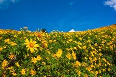 Het gele gebied van de bloem Royalty-vrije Stock Foto