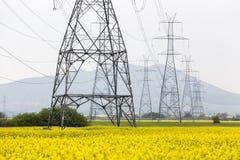 Het gele gebied van de raapzaadbloem en blauwe hemel met Elektrische post, binnen Stock Fotografie