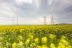 Het gele gebied van de raapzaadbloem en blauwe hemel met Elektrische post, binnen Stock Foto