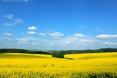 Het gele gebied van verkrachtingscanaol Stock Foto's