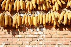 Het gele graan drogen op een oranje muur in China royalty-vrije stock afbeelding