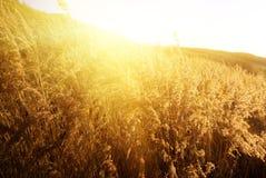 Het gele gras van de herfst stock foto