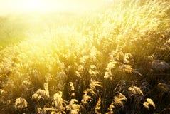 Het gele gras van de herfst stock afbeeldingen