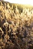 Het gele gras van de herfst royalty-vrije stock foto's