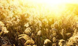 Het gele gras van de herfst stock foto's