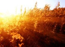 Het gele gras van de herfst stock afbeelding