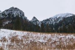 Het gele gras van de de winterberg landscapeб vooraan Royalty-vrije Stock Afbeelding