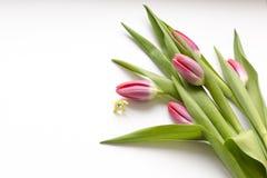 het gele konijntje van Pasen naast tulpen stock afbeeldingen