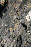 Het gele korstmos groeien op rotsen in Schotland, Dumfries en Gallowa stock afbeelding